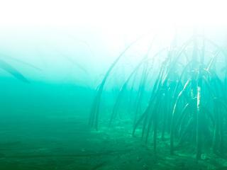 feature mangrove fade summer2018