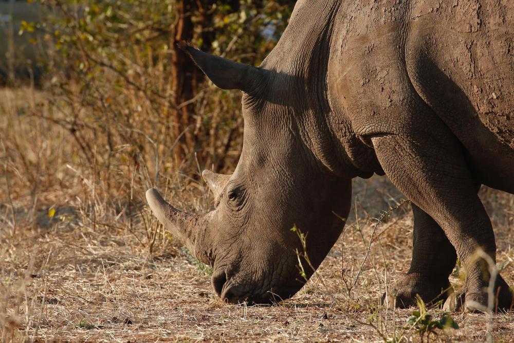 Discover zambia rhino summer2018
