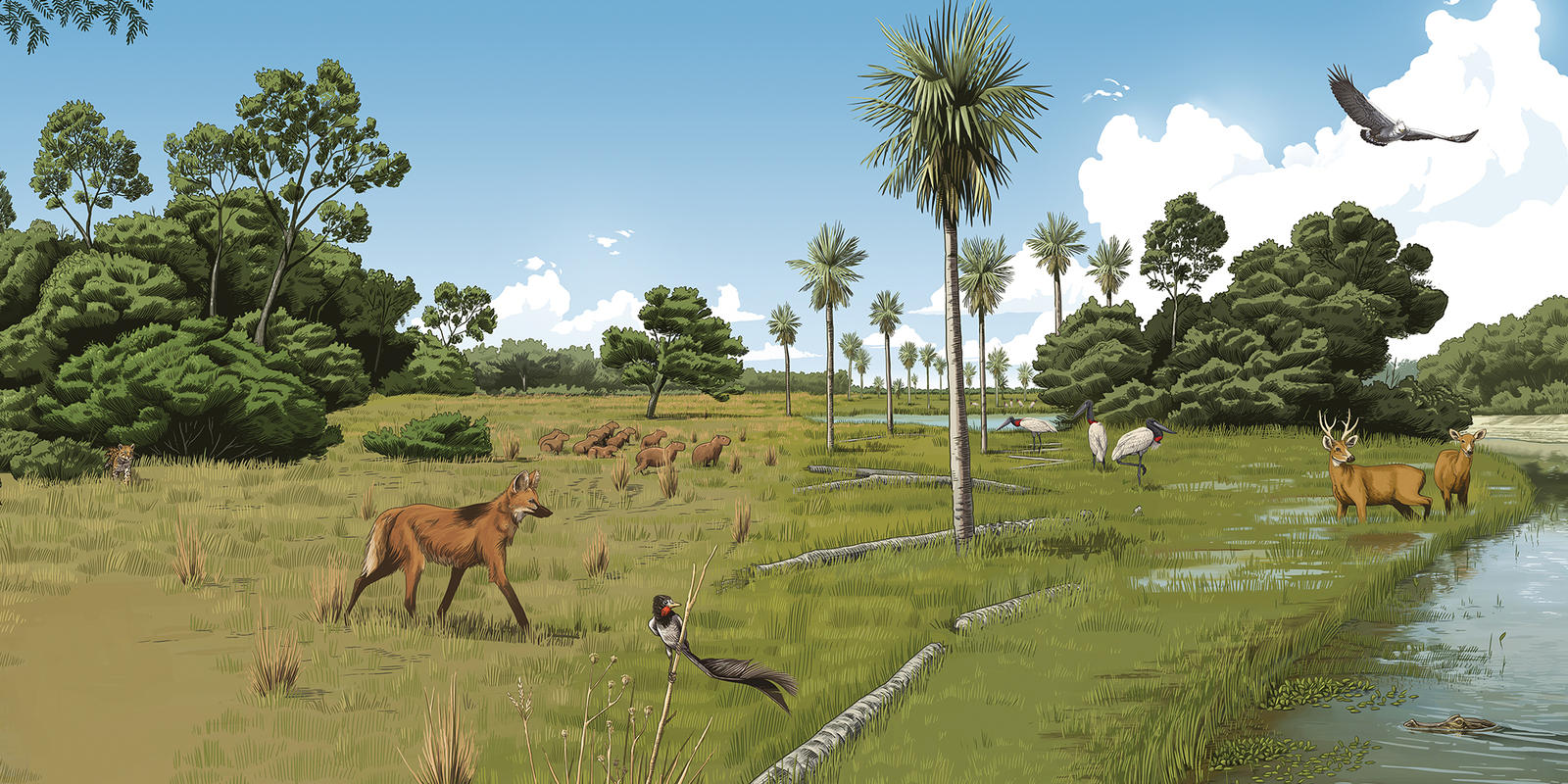 illustration of the humid landscapes in the Gran Chaco