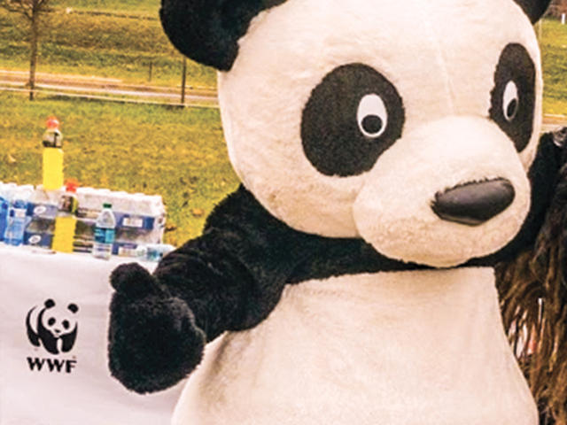Pandy the panda waving