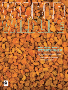 World Wildlife Magazine Summer 2018 cover