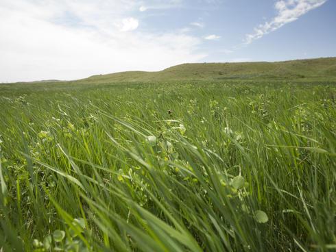 Montana Grasslands