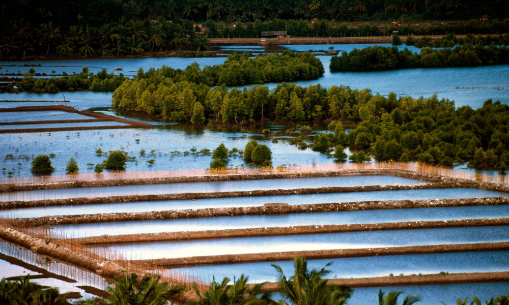 Tambak, freshwater aquaculture. Lampung Province, Indonesia