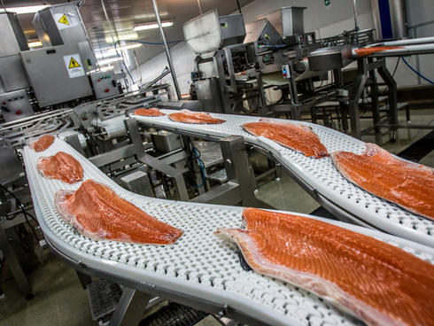 PUERTO MONTT, CHILE: Workers process industrially farmed salmon to be shipped at the AquaChile processing plant in Puerto Montt. AquaChile is the largest exporter of salmon in Chile.