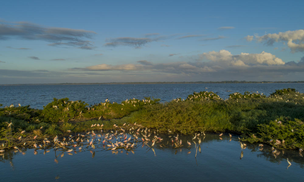 Aquatic birds nesting during nesting season.