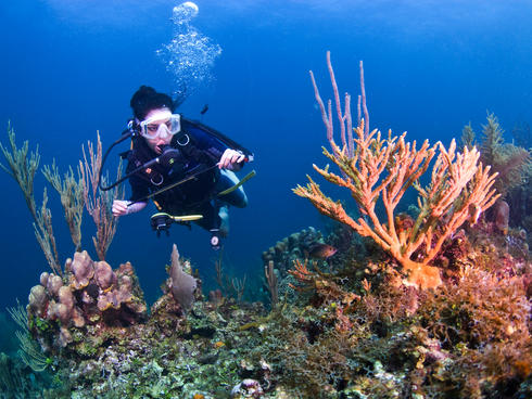 A conservation and marine technical officer for WWF MAR, inspecting coral reef in Cordelia Bank. Roatan, Bay Islands, Honduras, Central America.