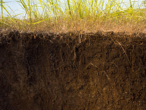 Prairie roots and soil profile in healthy grasslands, South Dakota, USA