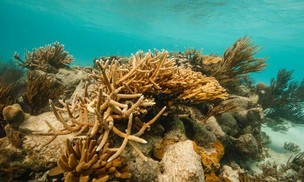 Coral reef Belize Audra Melton WW15733