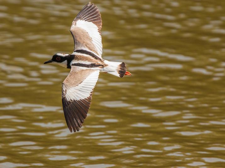 Bita river bird Jorge Garcia