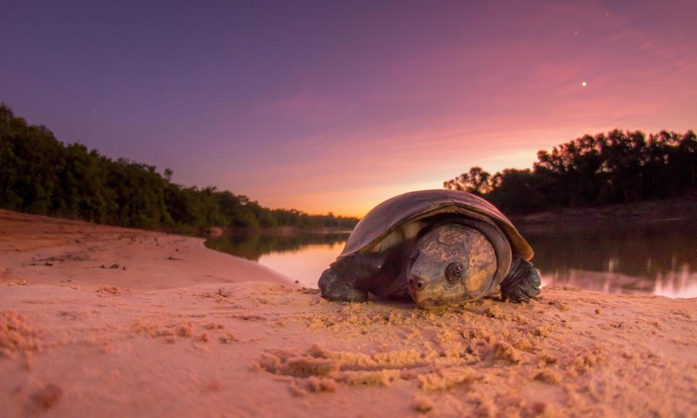 River Bita turtle Jorge Garcia