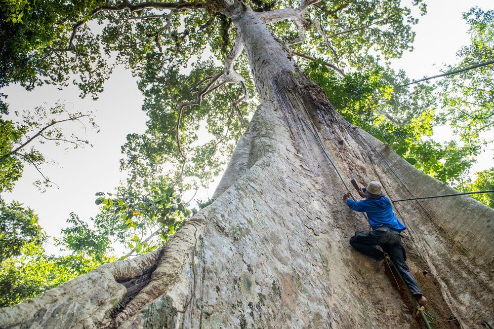 thirtyhills treeclimb fall2018