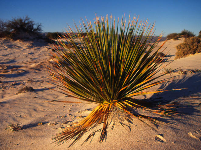deserts animals and plants - photo #10