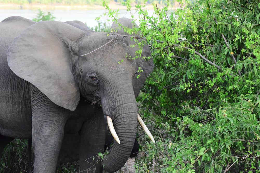 Discover elephant fall2018
