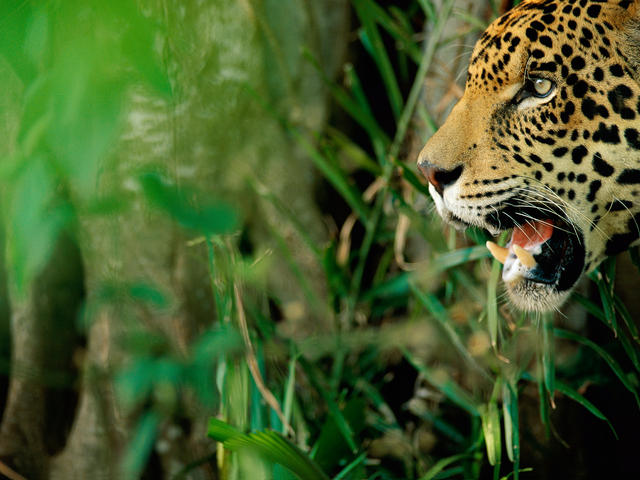 5 Amazing Animals That Live In The Pantanal And Need Our Help Stories Wwf
