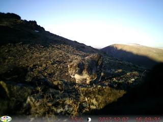 snow leopard camera trap