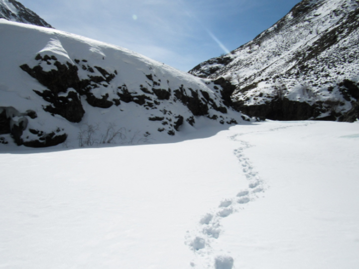 snow leopard tracks AKuksin
