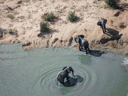 Aerial photo of three African elephants emerging from water