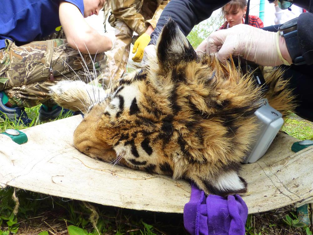fieldnotes tiger 3 winter2018