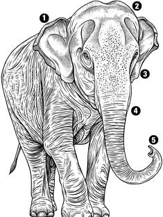 Illustration of elephants