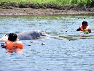 dolphin tagging Peru Jeffrey Davila