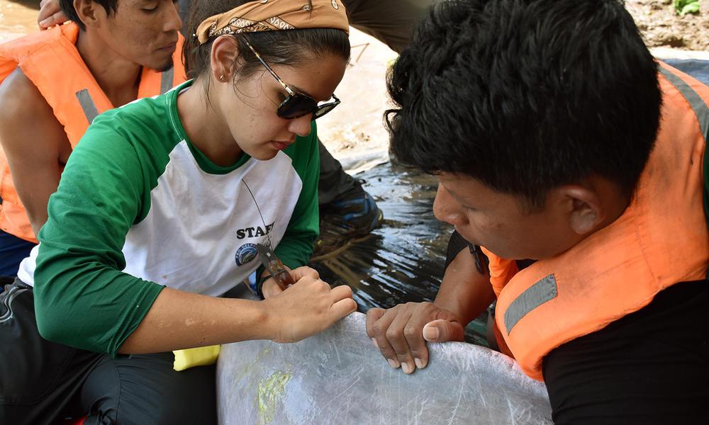 tagging Peru Jeffrey Davila