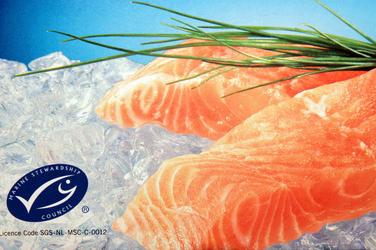 Salmon on ice