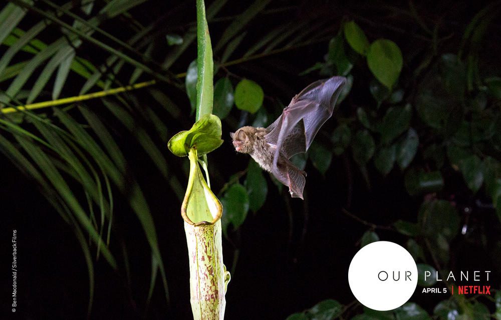 Our Planet | Pages | WWF