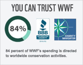 84% of WWF's spending is directed to worldwide conservation activities