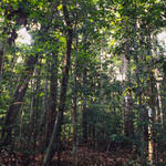 Global Forest and Trade