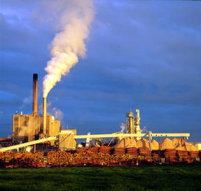 Pulp and Paper | Industries | WWF