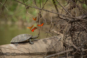 butterflies and a turtle on a log