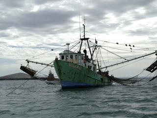Tropical Shrimp Fishing Boat