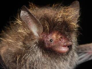 Lance Bass Bat Pipat Soisook