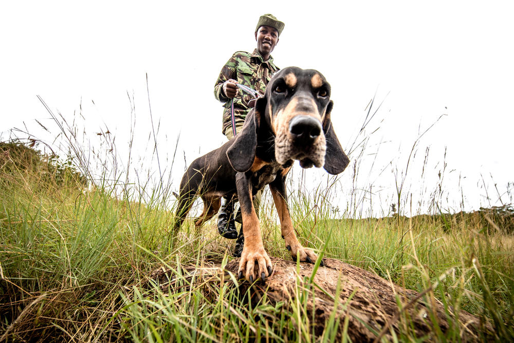Ranger with dog