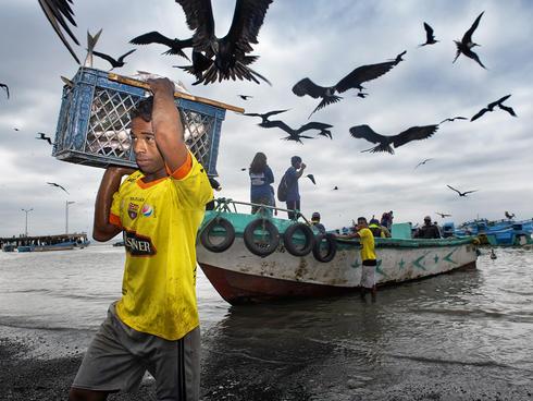 Workers unloading fish in Posorja, Ecuador.