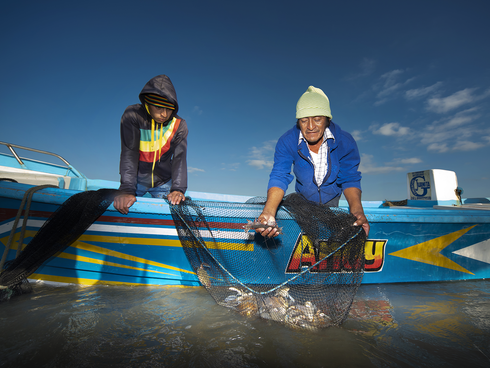 Fishers checking their nets for pomada shrimp