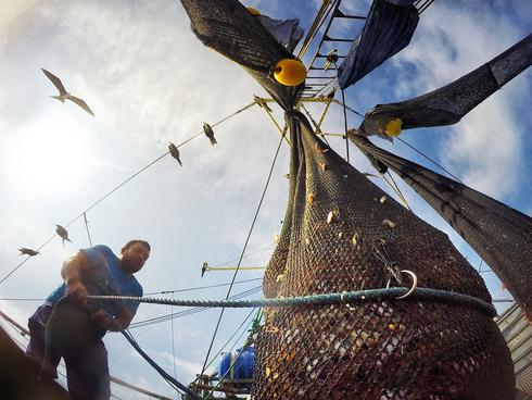 A crew member pulls a net full of pomada shrimp aboard a trawler off the coast of Posorja, Ecuador