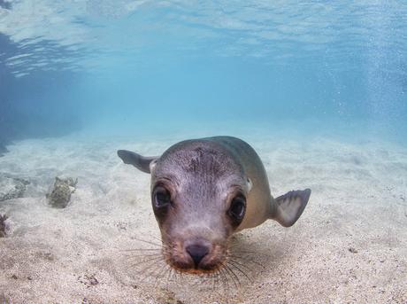 Seal swimming underwater