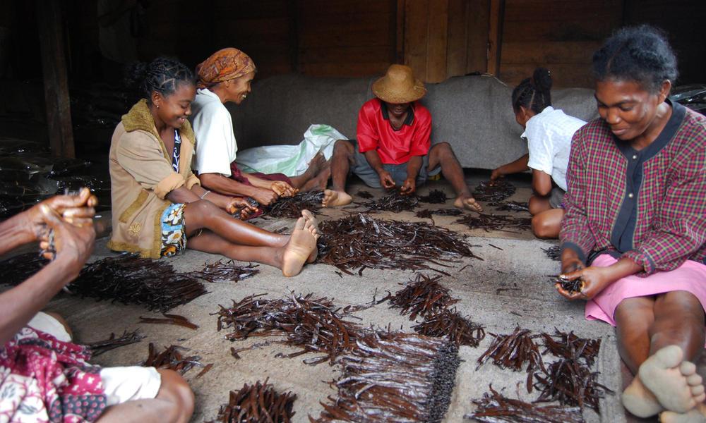 Vanilla farmers, Ambosihasina, Madagascar