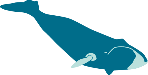 Illustration of Bowhead whale
