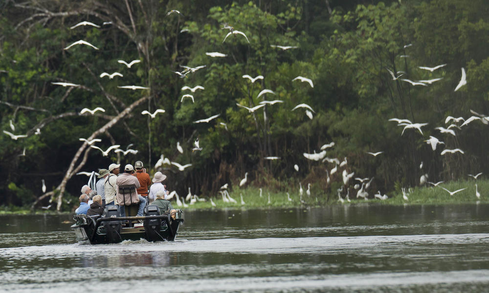Travellers bird watch in the Peruvian Amazon