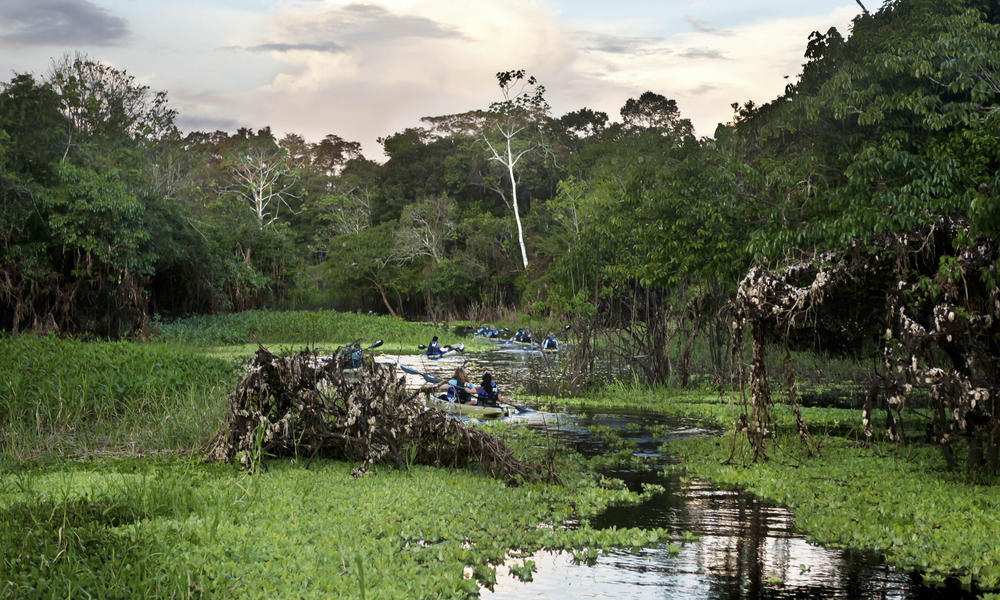 Travellers kayak along Dorado Creek off the Ucayali River in Peru