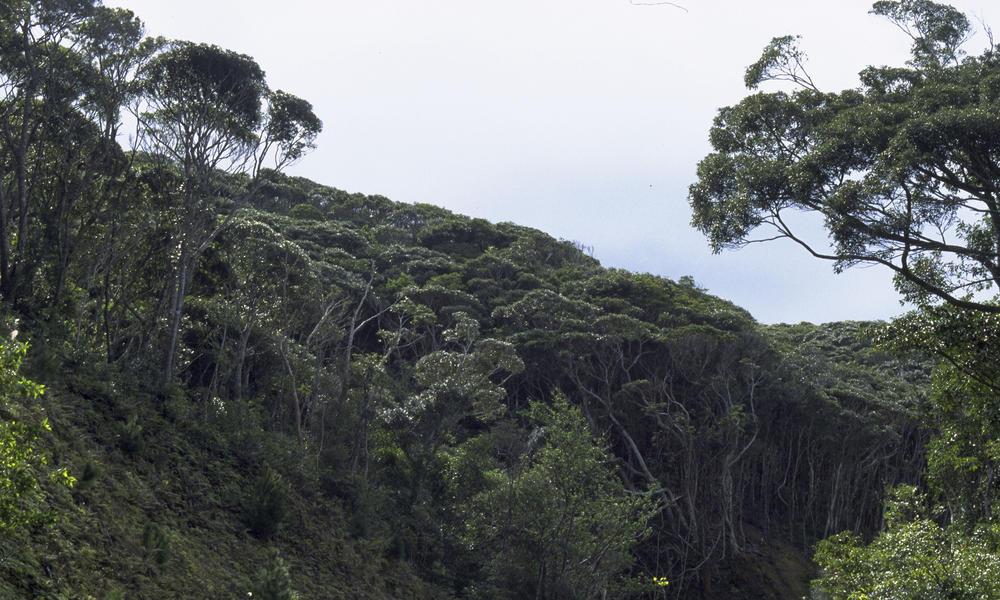 subtropical forest WW1108344 Mima Junkichi