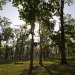 Restoring Degraded Forests in Royal Bardia National Park
