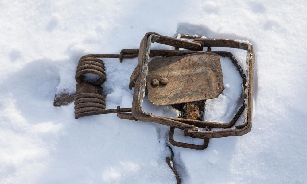 A tiger trap in the snow