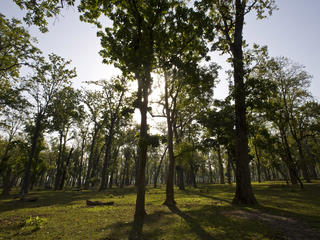 Responsible Forestry: Restoring Degraded Forests