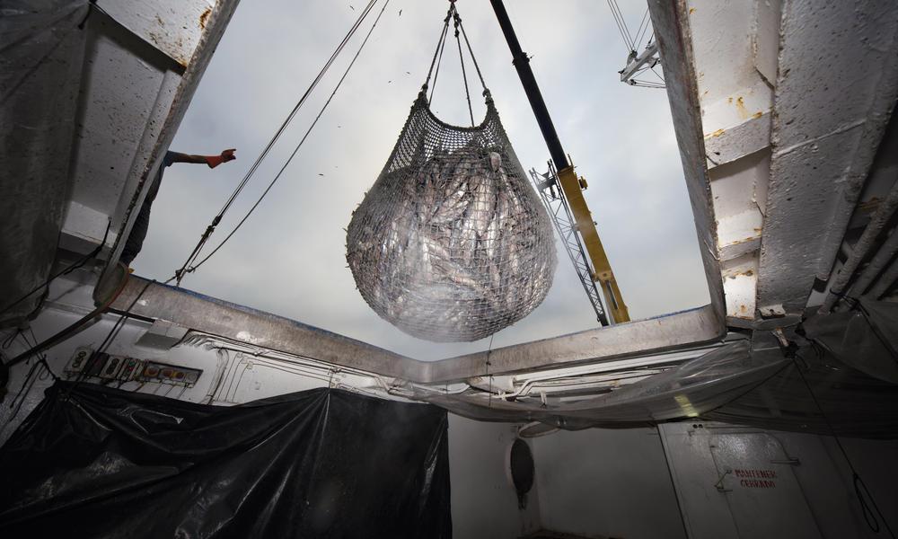 Processing tuna in Ecuador