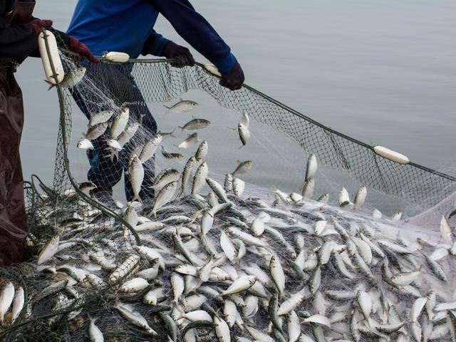 Fishers pull in net