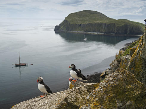 Puffins in the Shiant Isles, Scotland