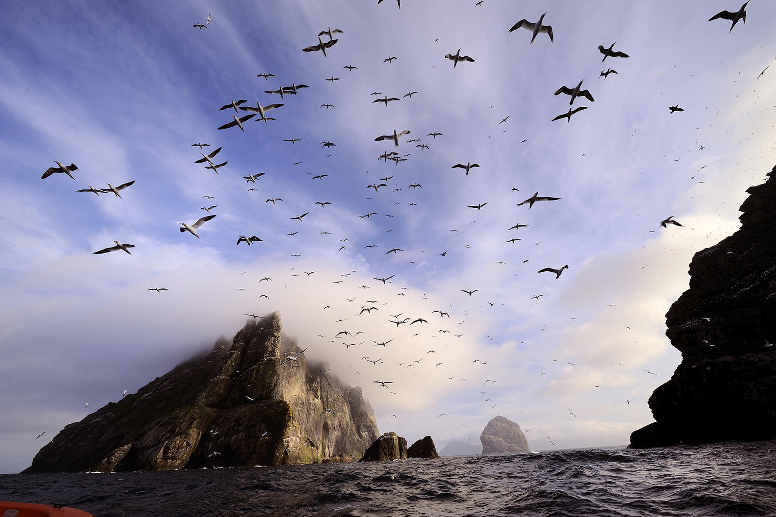 Seabirds flying near the Shiant Isles, Scotland.